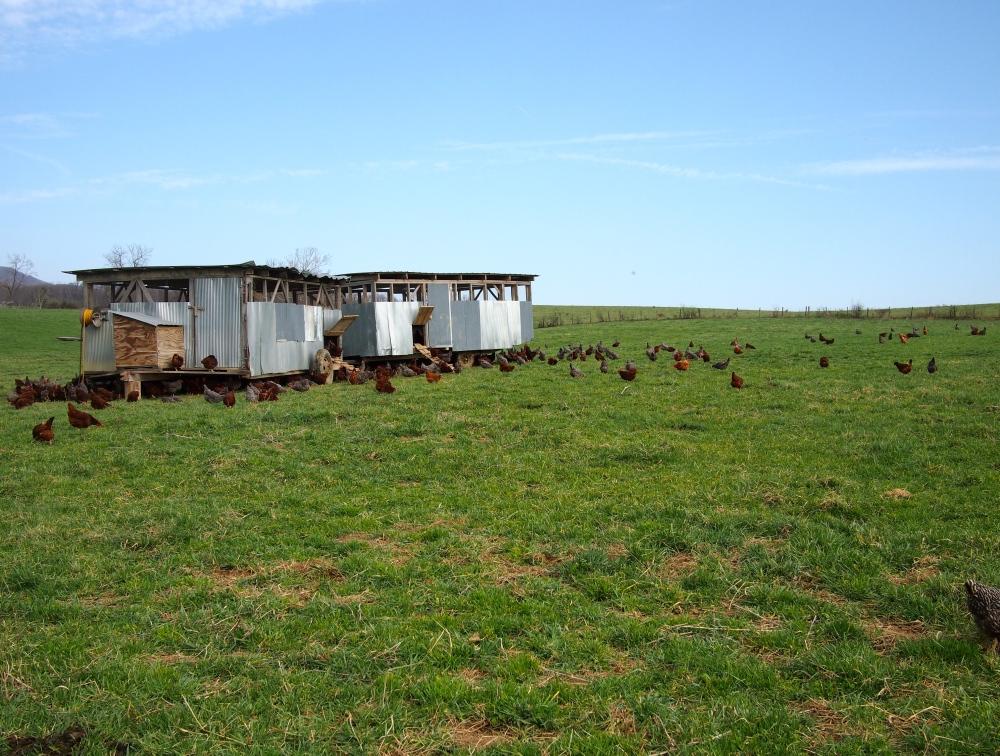 Polyface Farm, Eggmobile