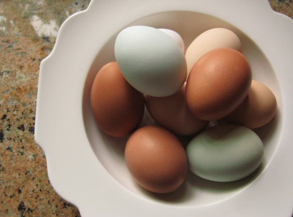 fresh eggs, organic eggs, beautiful eggs